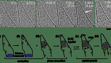 Фото Электронный микроскоп снял видео, как формируются кристаллы NaCl